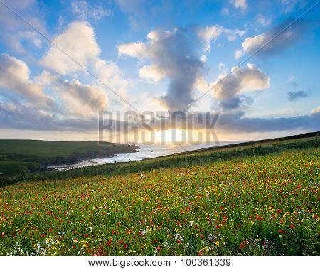 Wild Flowers At Porth Joke Cornwall