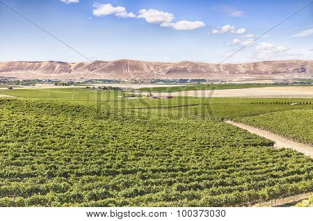 Vineyards On Red Mountain