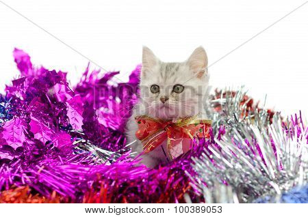 Cute tabby kitten sitting in colorful tinsel onwhite background