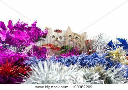 Cute two tabby kitten sitting in colorful tinsel onwhite background