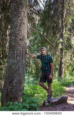 Hiker Man In A Secular Fir Firest