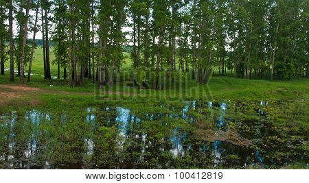 Country Landscape Whith Reflection In The River, Bogolubovo, Russia