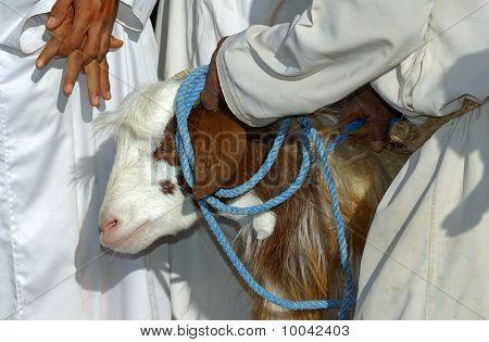sheep for sale Goat market Nizwa Sultanat of Oman poster