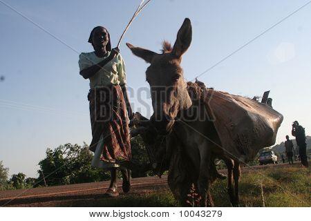 Donkey Transport