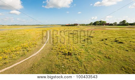 Small Curved Path Through A Colorful Nature Reserve