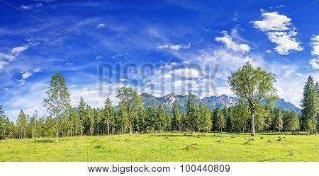 Panorama Image Alps