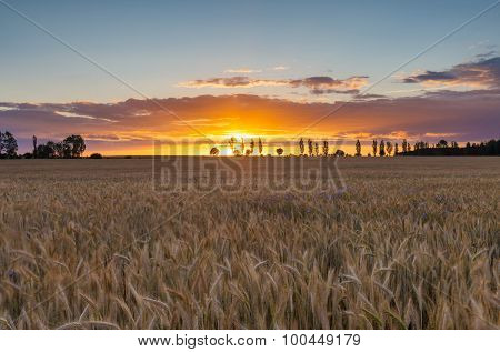 Beautiful Vibrant Sunset Over Field