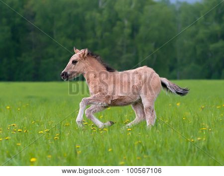 Young Filly Running