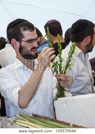 JERUSALEM, ISRAEL - OKTOBER 8, 2014:  Young religious man in a gray skullcap carefully chooses ritual  myrtle - adas. Traditional market before the holiday of Sukkot