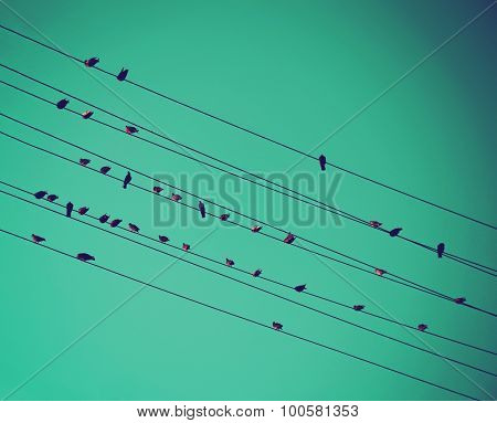 birds on wires over blue sky with blue sky background toned with a vintage retro instagram filter app or action effect