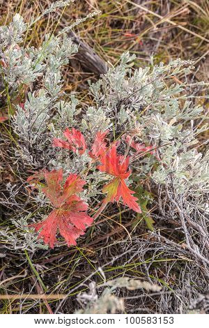 Red Mixed With Silvery Green