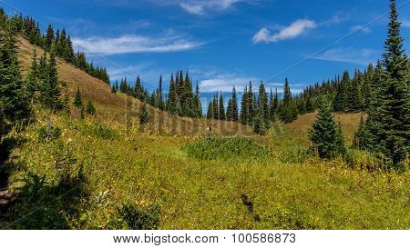 Hikers following a trail through the alpine meadows