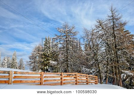 Winter Forest And Wood Fence