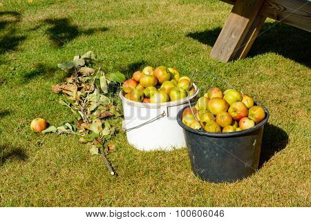 Discarded Apples