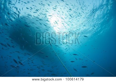 Shoal Of Fish Silhouetted Underwater