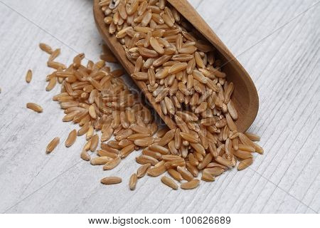 Ancient Grain Kamut, Khorasan Wheat, Triticum Turgidum