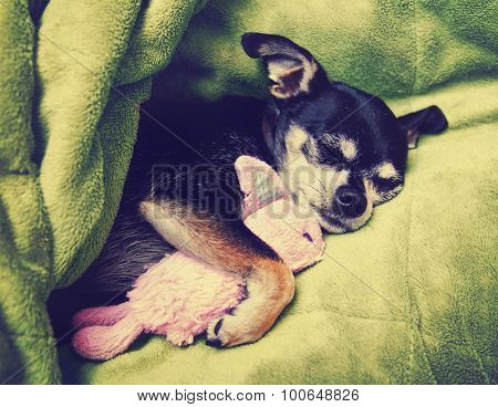 a tiny chihuahua cuddling with his pink bunny stuffed animal toy under a green blanket toned with a retro vintage instagram filter app or action effect poster