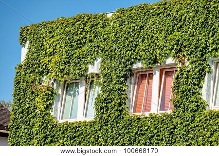 leafy house facade, symbol of insulation, isolation, growth