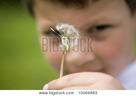 Yound Boy Holding A Dandelion