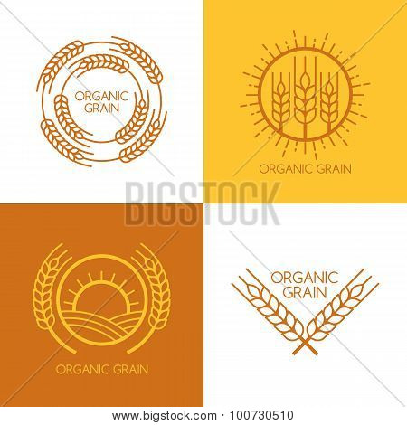 Set of vector linear wheat fields logo design template. Abstract concept for organic products harvest grain bakery healthy food. poster