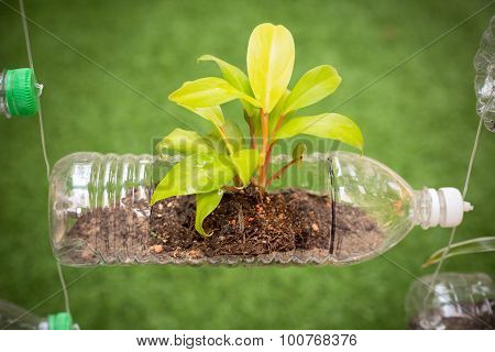 Empty Plastic Bottle Use As A Container For Growing Plant, Recycling Green Concept