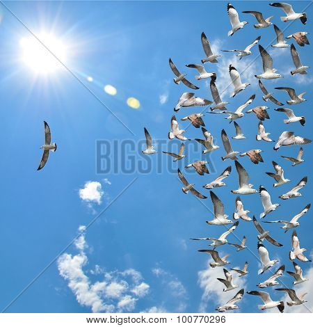 Flying Seagull Birds