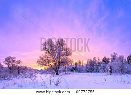 Winter Landscape Panorama With Sunset And The  Forest