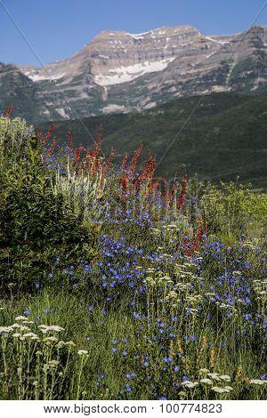 Beautiful Wild Flower Scene On Rocky Mountain Vertical Landscape