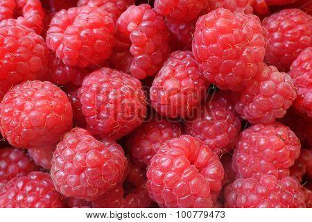Fresh Berries Raspberry European, Rubus Idaeus