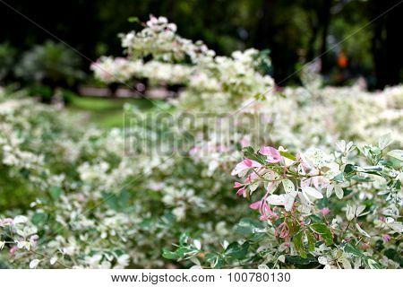 Flowers bloossom in Tao Dan park, Vietnam