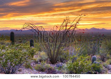 Sonoran Desert catching day's last rays near Tucson. poster