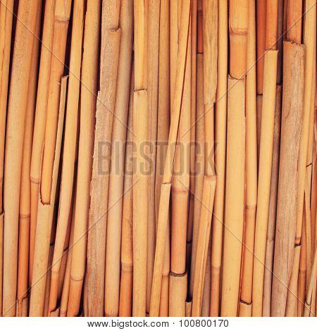 Haulm Umbrella Macro Photo. Dried Haulm Texture.