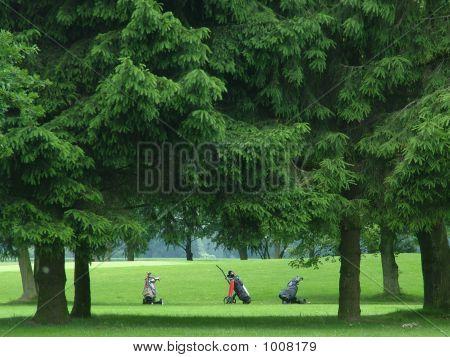Golf Bags On The Fairway