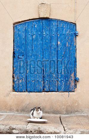 Street Cat Awaiting a Meal