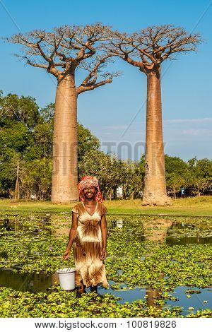 Woman From Village Near Baobabs Avenue