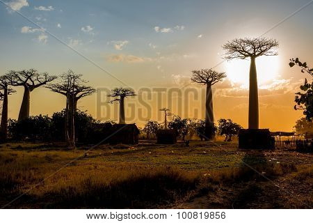 Evening In The Village Near Baobab Avenue