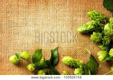 Ingredients for brewing beer. Fresh Hop on burlap close up. Green Hop cones with leaves over sack linen texture. Burlap background. Beer brewing concept. Brewery. Copy space for your text