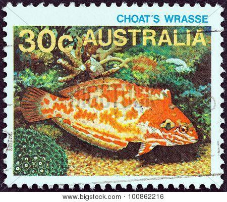 USTRALIA - CIRCA 1984: A stamp printed in Australia shows Choat's wrasse