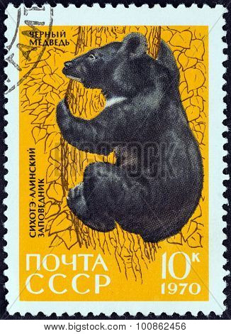 USSR - CIRCA 1970: A stamp printed in USSR shows Asiatic black bear