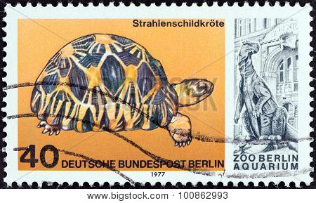 WEST BERLIN - CIRCA 1977: A stamp printed in Germany shows a Radiated tortoise (Astrochelys radiata)