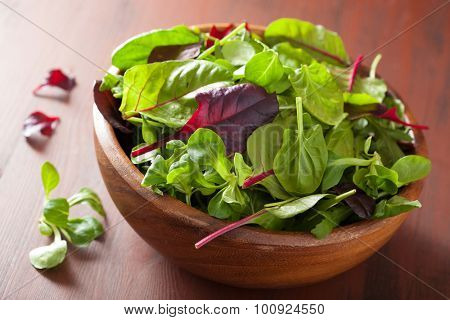 fresh salad leaves in bowl: spinach, mangold, ruccola