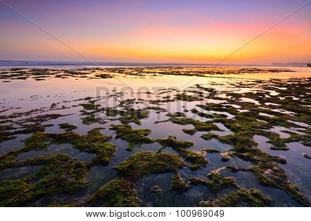 Mossy beach on sunset