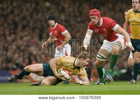 CARDIFF, WALES. 28 NOVEMBER 2009.  David Pocock of Australia scrambles for a loose ball while playing in the Invesco Perpetual International Rugby Union match between Wales and Australia