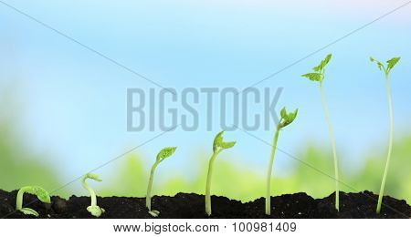 Bean seed germination different stages on nature background