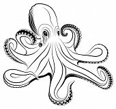 Vector octopus represented in the form of a tattoo. poster
