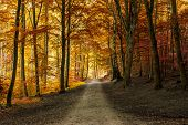 Autumn fall forest with pathway in beautiful orange yellow and red colors. seasonal autumn nature forest fall themes poster