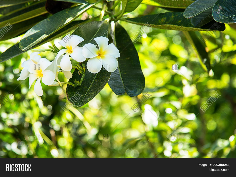 White green flowers image photo free trial bigstock white green flowers flower background leaves spring beautiful mightylinksfo