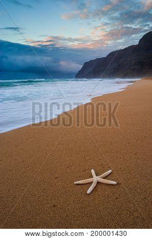Starfish On Polihale Beach At Sunset, Kauai, Hawaii