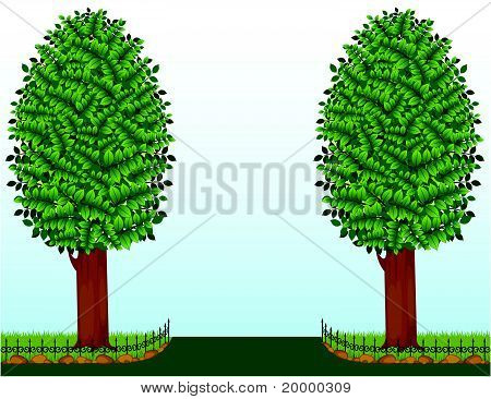 The two trees growing on the lawns with the fence