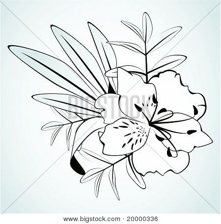 Flowers on a white background for the design of